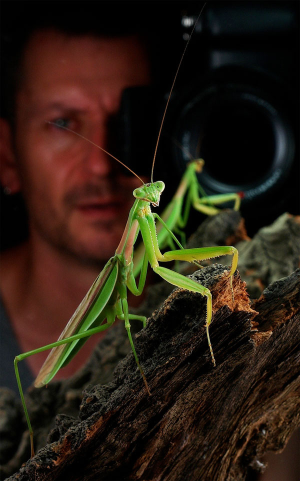 Sinobug-JohnHorstman.jpg