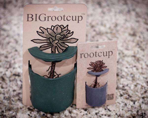 rootcup3.jpg
