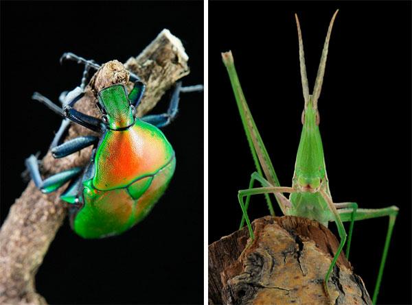 sinobug-flowerbeetle-grasshopper.jpg