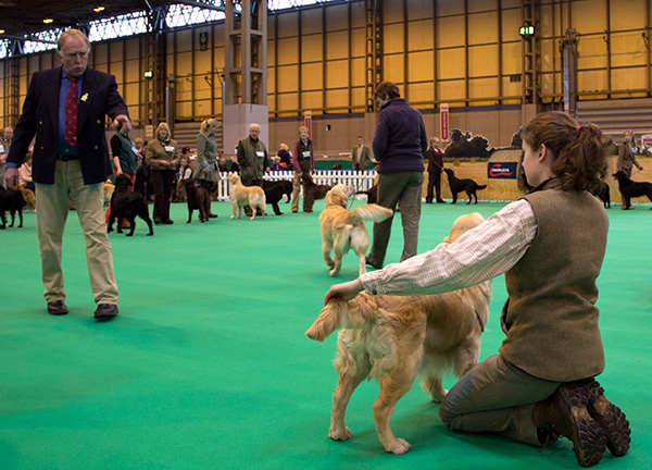 crufts-gamekeeper-retriever.jpg