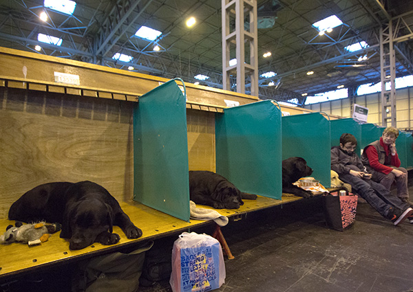 crufts-labs-8.jpg