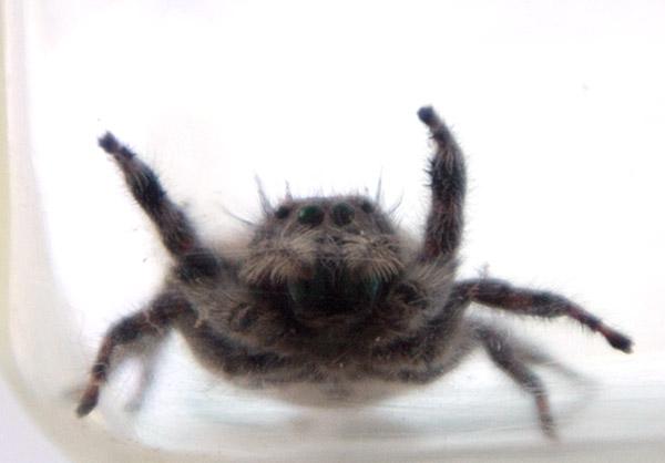spider9.jpg