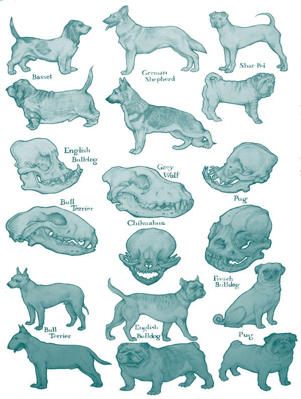 pedigreedogposter.jpg