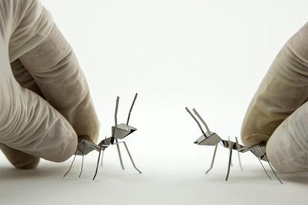 poligon-ants.jpg