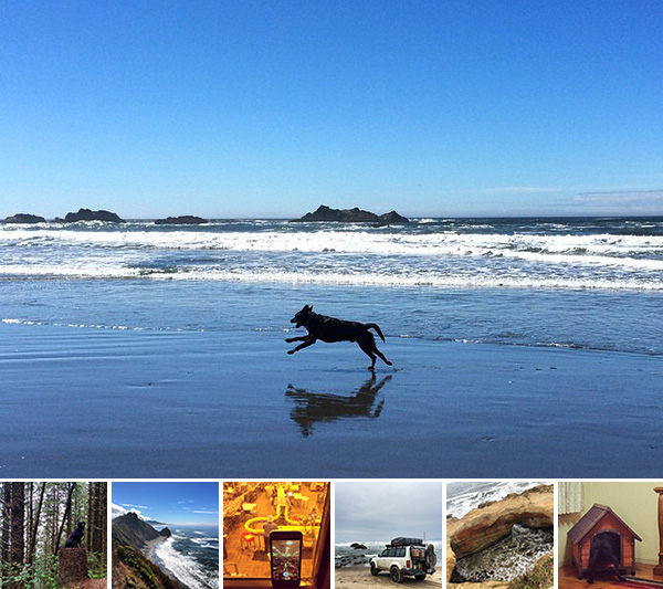 Road Trip: Oregon + NorCal Coast