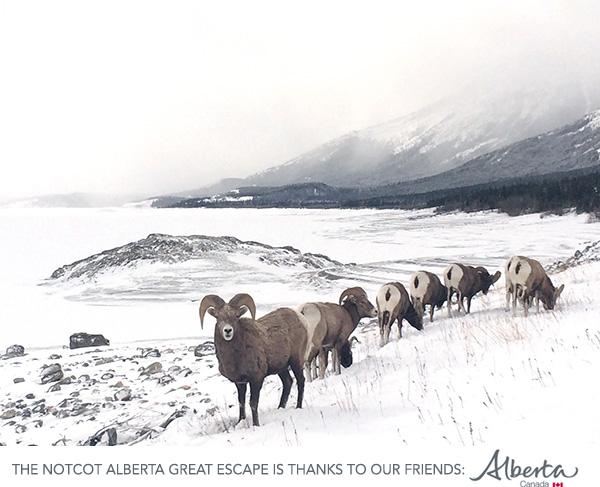 sheep0.jpg