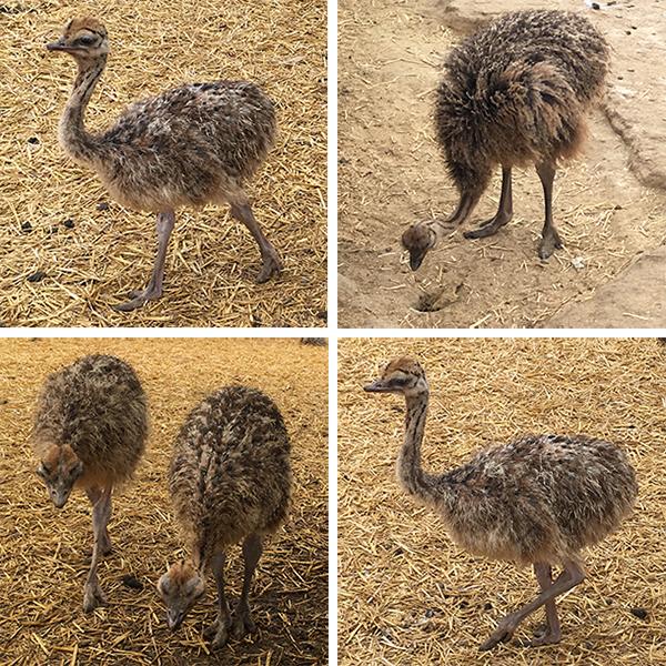 ostrichland10.jpg