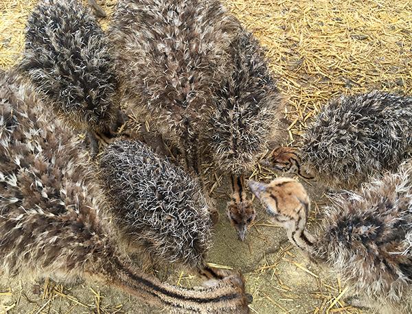 ostrichland12.jpg