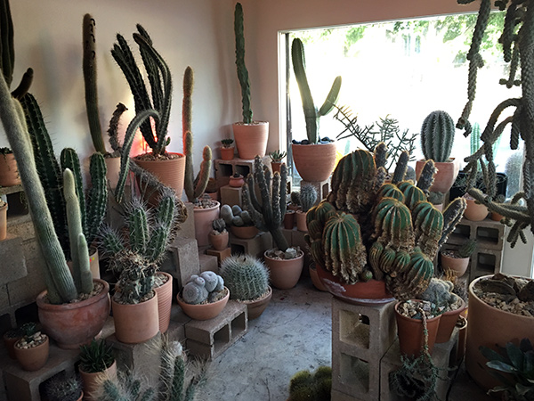 The (Hot) Cactus Store of Echo Park