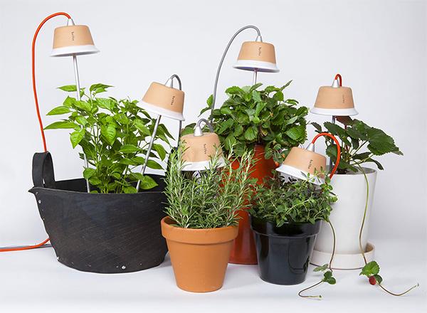 Bulbo Cynara LED Grow Lights