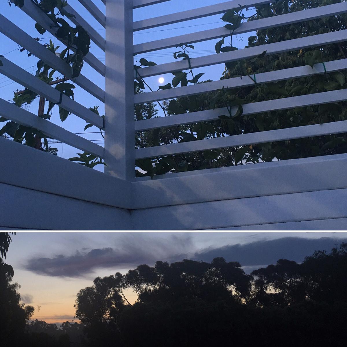 passiflora22.jpg