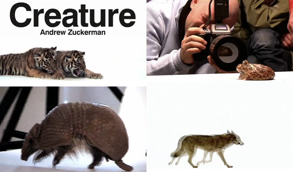 creature1.jpg