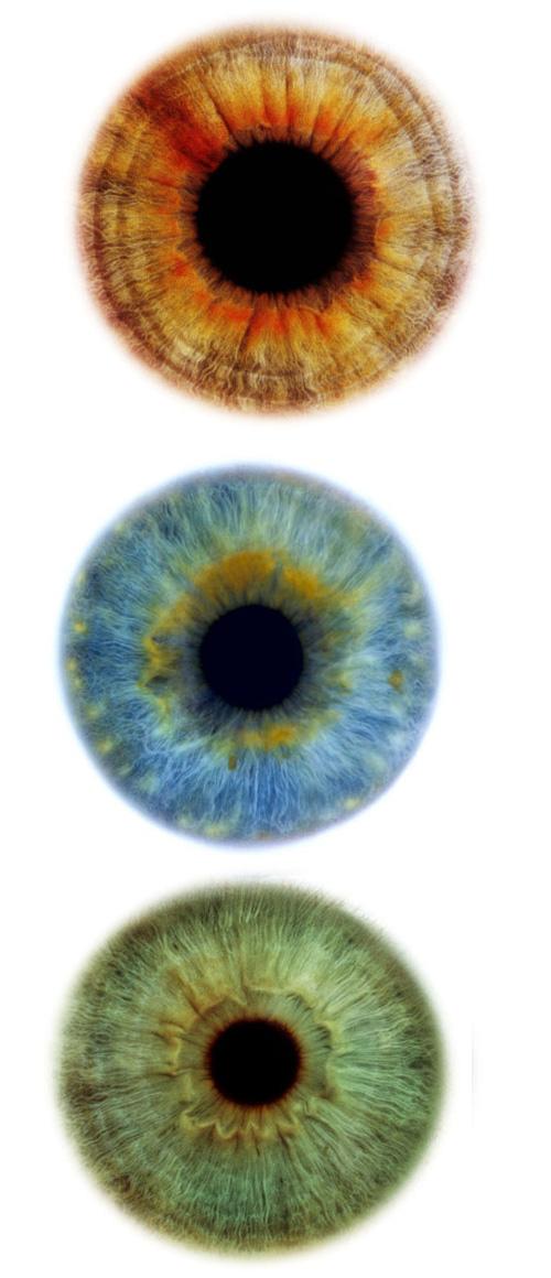 eyescapes1.jpg
